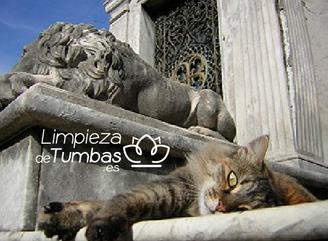 gatos cementerio de la recoleta