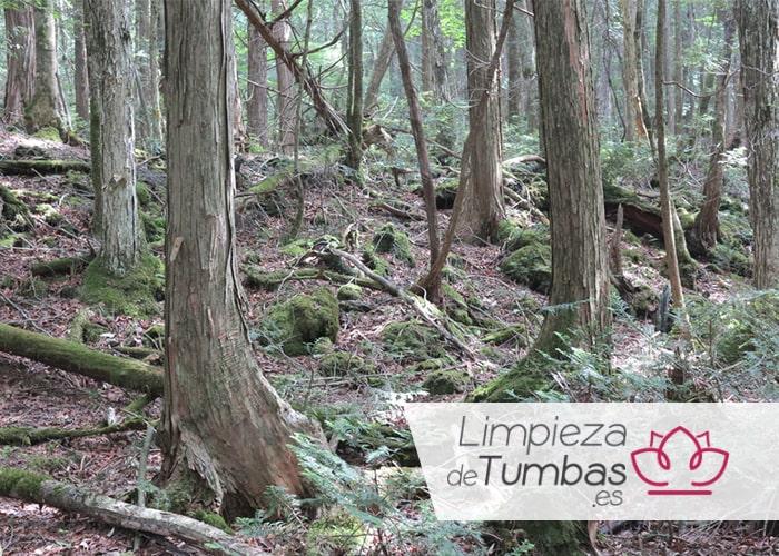misterioso bosque okigahara